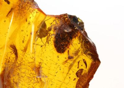 bernstein-insekten-1024
