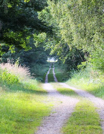 fahrrad-waldweg2-1024