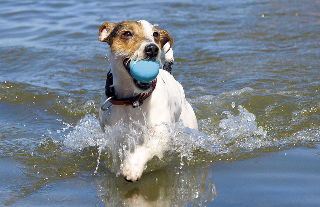 Ferienwohnung Dahme mit Hund