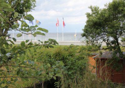 Seestern-Blick2